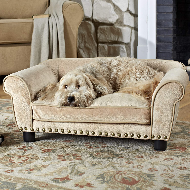 Thú cưng và sự ảnh hưởng đến thời gian làm sạch sofa